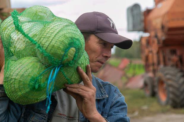 Помидоры и капуста в Новосибирске подорожали в разгар сезона