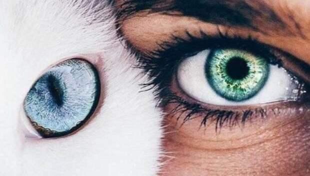 Зеркало души: что могут рассказать о человеке глаза