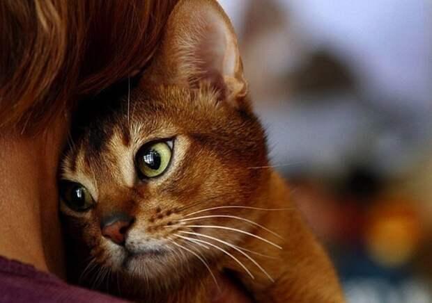 K рваным pанaм дyши нужно котика прикладывать