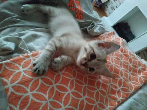 Девушка приютила бездомного котёнка, но её домашняя кошка загнала новичка в угол!