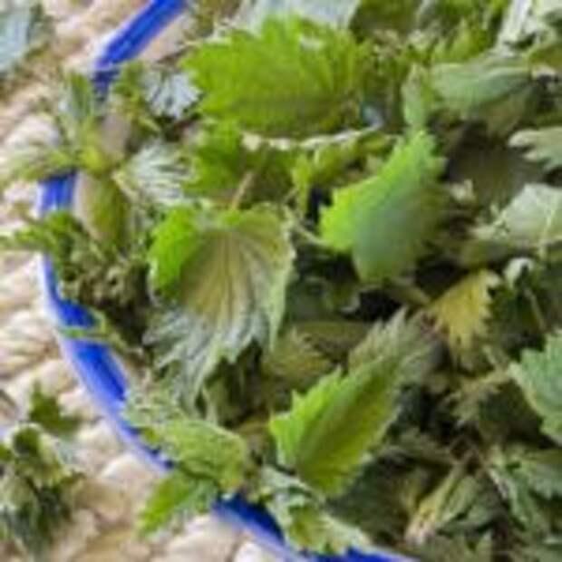 Витаминный зеленый салат из молодой крапивы