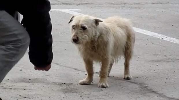 Любовь и забота помогли этой собаке вернуть доверие к людям