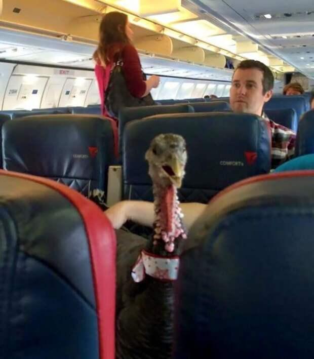 Да, я тоже животное-помощник! животные, забавно, летайте самолетами, мило, пассажиры, самолет, собаки, хвостатые пассажиры