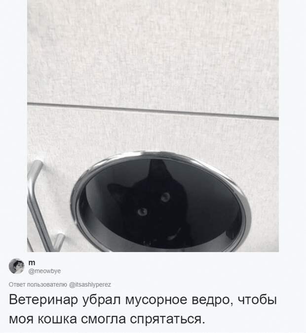 кот спрятался