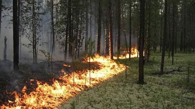 Дым от лесных пожаров в РФ достиг Северного полюса