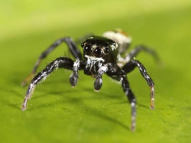 File:Kaldari Pachomius male 02.jpg - Wikipedia