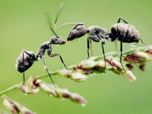 25 способов избавиться от муравьев на даче