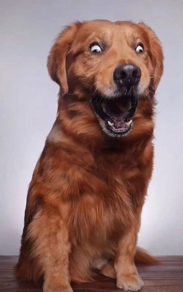 Когда бросаешь своей собаке вкусняшку