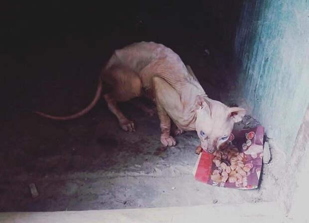 Фотография подвального сфинкса появилась в соцсетях.