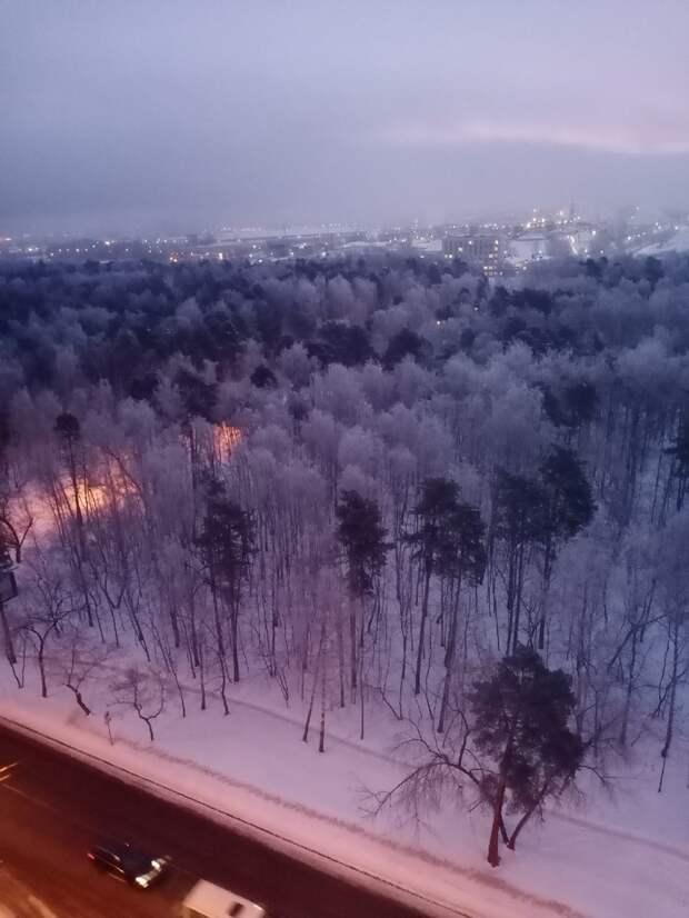 Фото дня: сказочный лес на 1-й Вольской