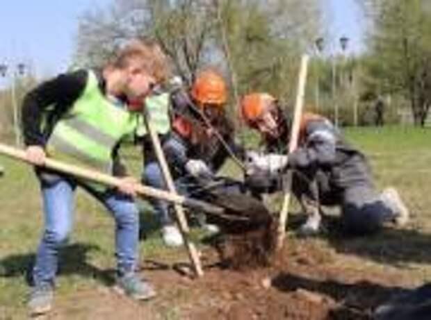 Распадская угольная компания в 2021 году высадит более 700 деревьев