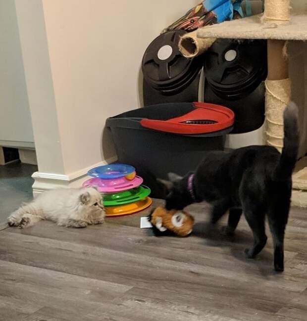 Кот принес игрушку