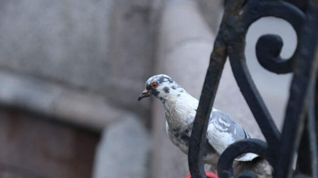 Доказана способность птиц и животных смеяться