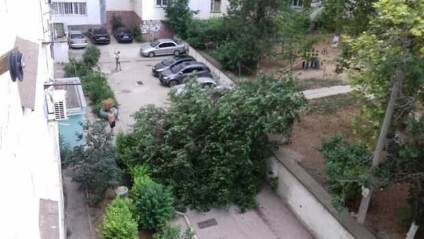 В Севастополе автомобиль придавило упавшим абрикосом (фото)