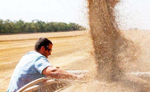 Из-за рекордного урожая пшеницы в России резко подорожают хлеб, макароны и водка