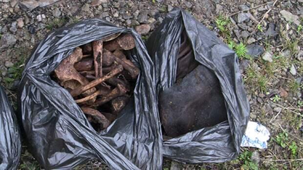 Петербурженка нашла мешок с человеческими костями во время прогулки в парке