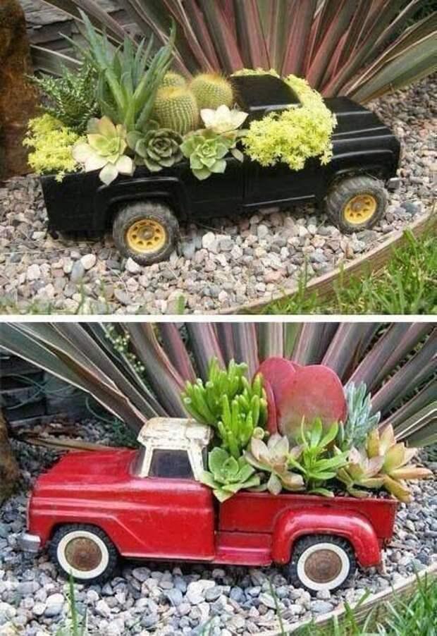 Растения в доме: идеи, как необычно разместить кактусы и суккуленты