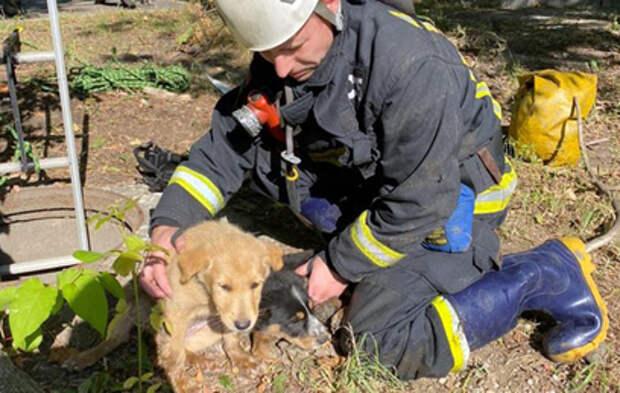 Двоих щенков спасли из колодца на севере Москвы
