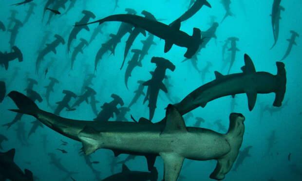 Остров Кокос: акулы хранят сокровища разбитых кораблей