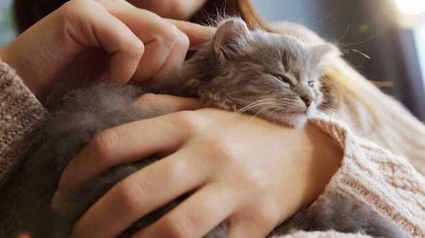 Как правильно выбрать имя кошке: три простых совета