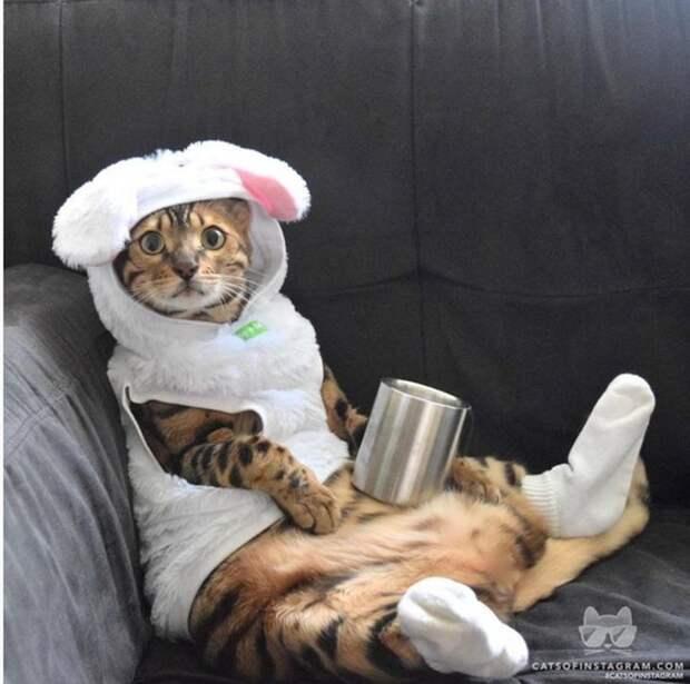 Немного смешных и забавных кошек