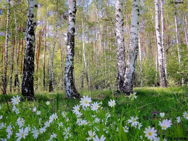 Красоты России (#602)