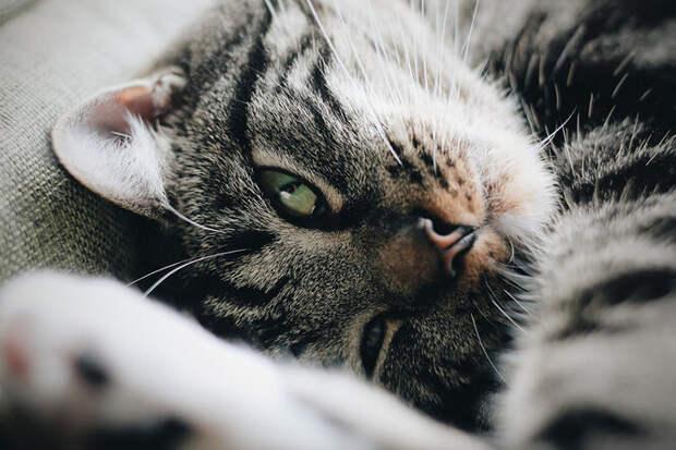 Она нереальная! 10 необычных фактов про кошек, о которых вы точно не знали