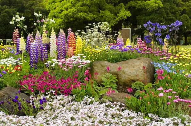 Клумбы из многолетников - таблицы цветения