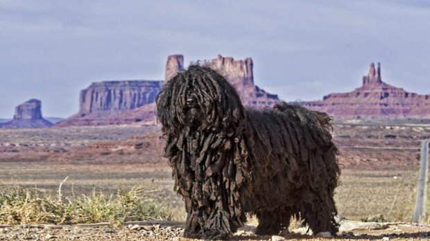 Длинная морда и отсутствие шерсти: 7 самых странных пород собак