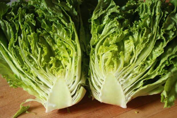 6 шагов для получения кочанного салата
