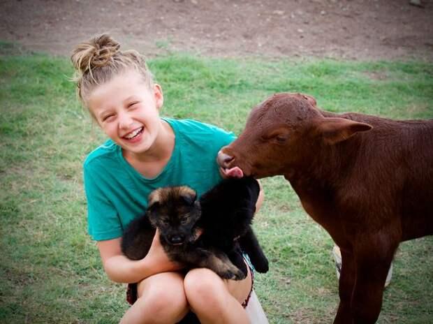Стоит ли переучивать теленка, воспитанного собаками, если быком ему не стать?