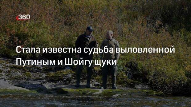 Стала известна судьба выловленной Путиным и Шойгу щуки