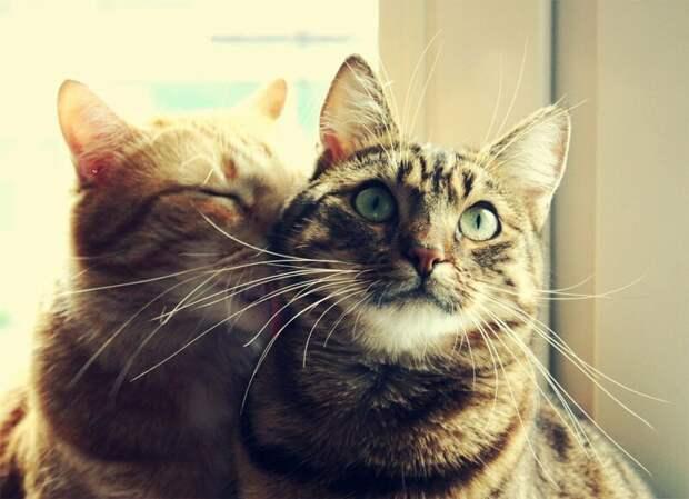 18. Если вы устали, кошка не обижается и не поворачивается к вам спиной. жены, интересное, кошки, юмор