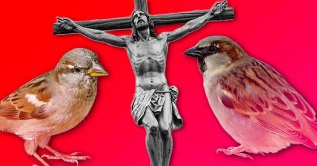 Почему воробей прыгает, а не ходит? Его проклял Иисус!