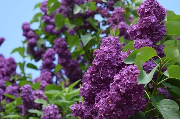 Погода в Крыму: 8 мая — тепло и сухо, 9 мая — задождит