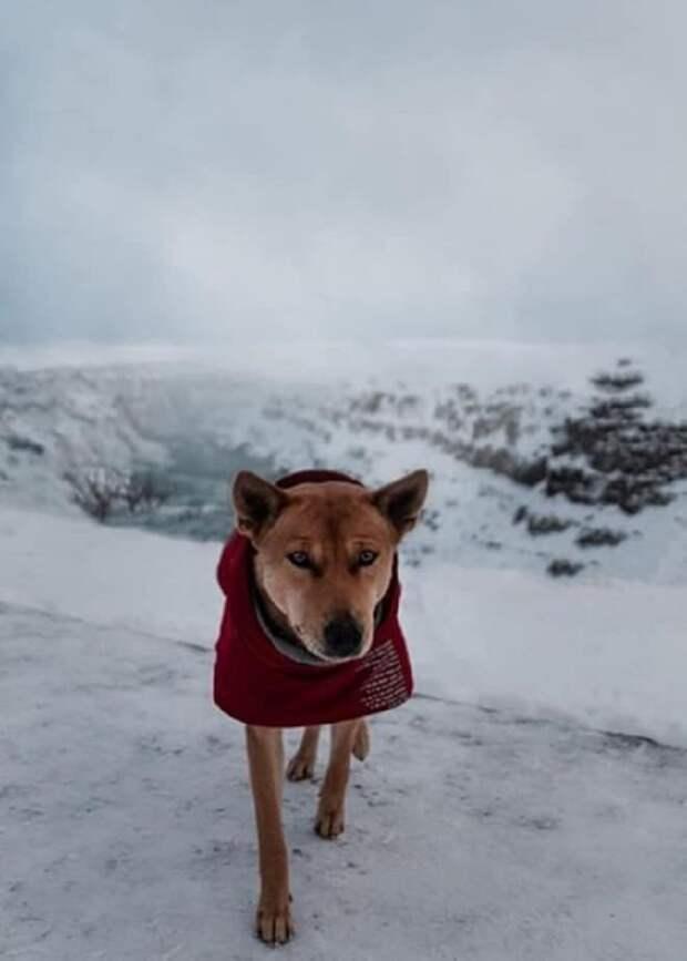Путешествуя, молодые люди увидели на границе между странами одинокого щенка, мечтавшего о хозяине