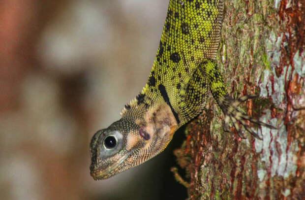 Животные Южной Америки: высоконог