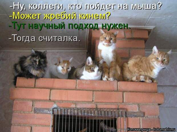 1451737515_kotomatricy-12