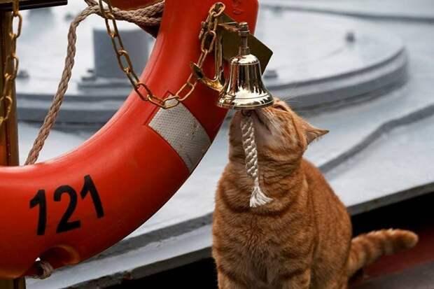 Минобороны показало новые фото военно-морского кота и назвало его кличку