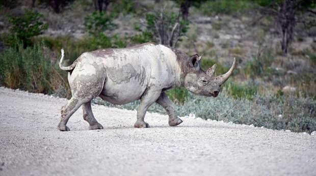 """""""Росатом"""" участвует в проекте по спасению носорогов"""