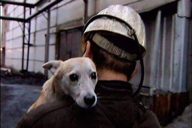 Собака Лялька изо дня в день трудилась в две смены, спускаясь в забой на протяжении 16 лет
