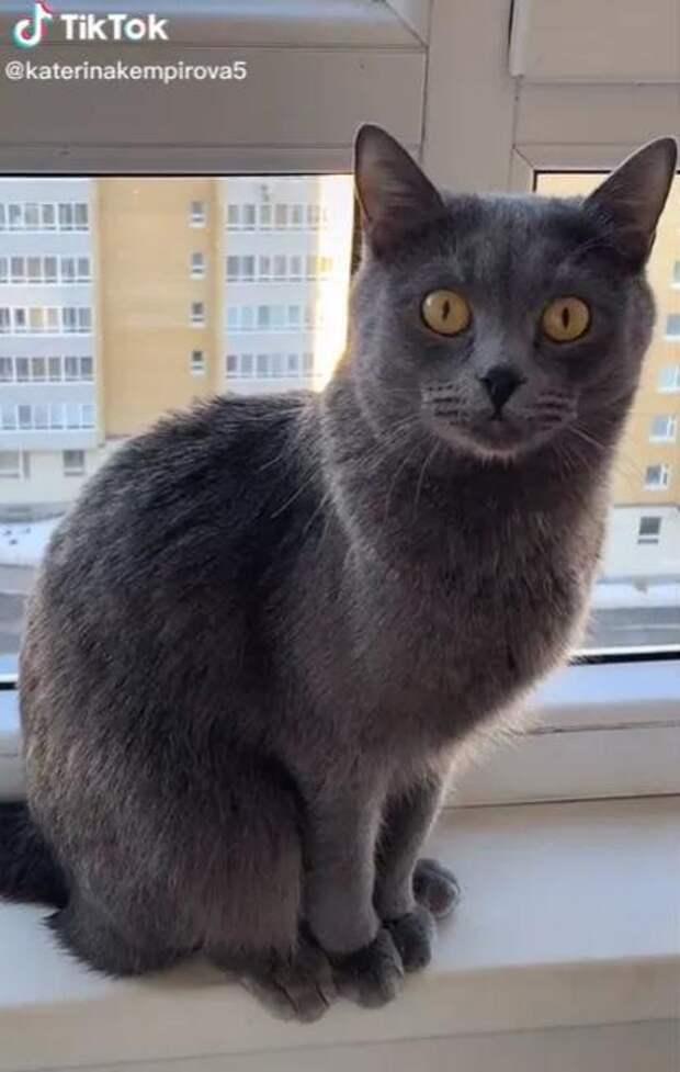 Женщина купила лысого котенка, но дальше ее ждал сюрприз