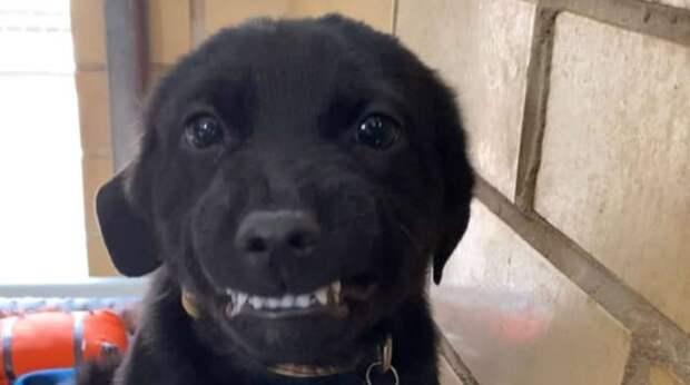 «Я хороший?» — щенок улыбается, слыша ласковый голос человека. Вот только дома у него по-прежнему нет