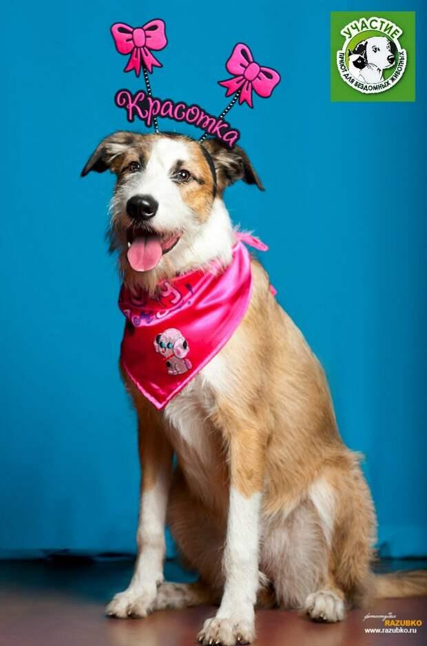 Собака с рождения жила в приюте, и никто не надеялся, что она кому-то будет нужна история, приют, собака