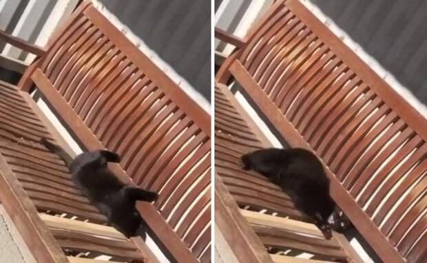 Хозяин до чертиков напугал кота. Теперь его ждут сюрпризы в тапках