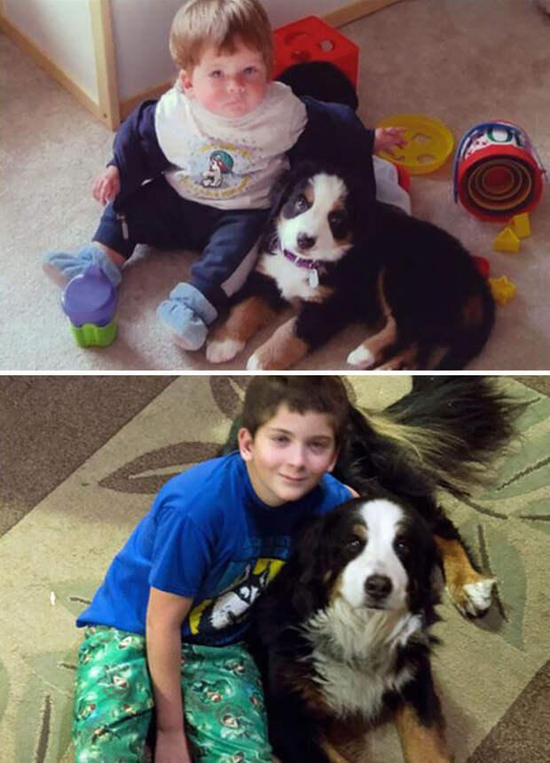 От 12 месяцев до 11 лет до и после, друзья, собаки, фото