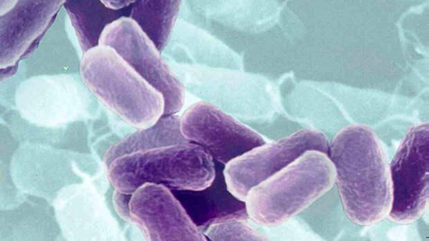 Сыпной Тиф. болезни, вирусы, история, эпидемия