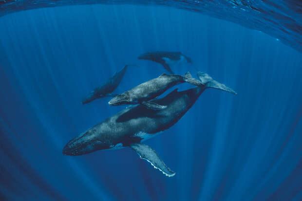 Тайная жизнь китов