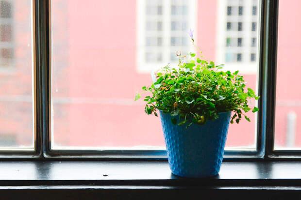 Эксперт МГУ перечислил домашние растения, которые убивают бактерии