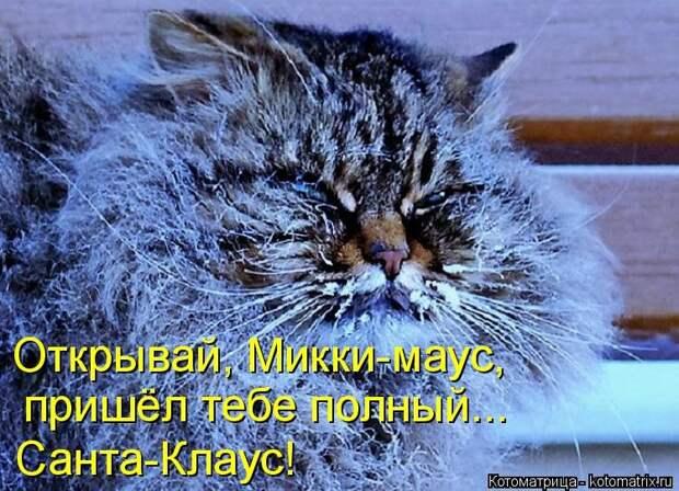 1451737483_kotomatricy-2